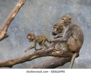 Image of monkey family sitting on a tree branch.