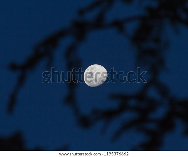 image of moon at evening with dark blue sky in background and silhouette of tree branches in foreground