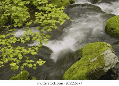An Image of Mountain Stream