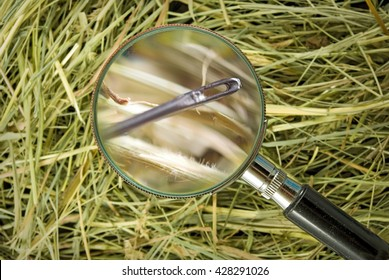 image of needle in the hay closeup