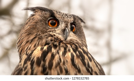 An image of an owl with great orange eyes