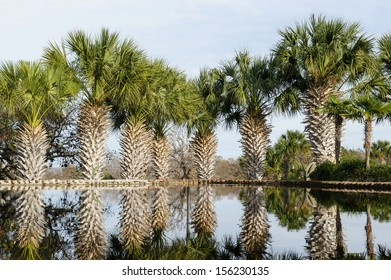 an image of palm trees outside