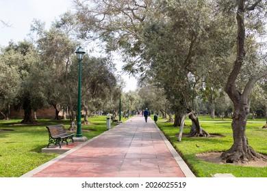 "Image of ""Parque el Olivar"" Olive Park in Lima Peru. San Isidro district. Forest of old olives open to public."