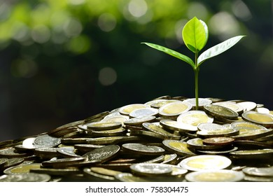 Image of pile of coins with plant on top for business, saving, growth, economic concept