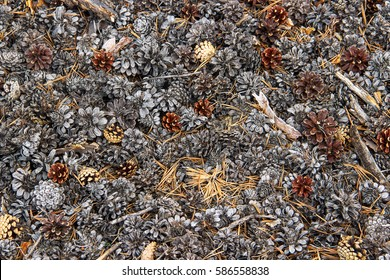 Image with pine cones lying on the ground in the forest. Pine-cones as background.