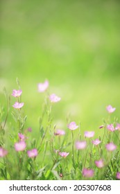 An Image of Pink Flowers