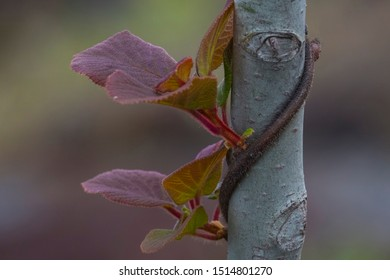 Image of a plant and a branch
