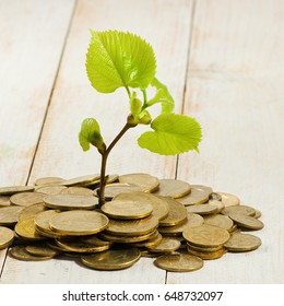 Image of plant and coins as a symbol of wealth and financial well-being