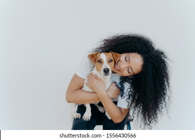 Image of playful pretty woman with Afro hairstyle, smiles gladfully, holds domestic animal, carries dog to veterian, isolated over white background. Glad lady pets jack russell terrier at home.