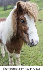 An image of a pony with fair hair and eyes