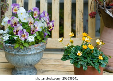 An Image of Potted Flower