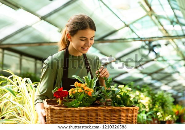 Image of pretty florist woman 20s wearing apron carrying basket with plants while working in conservatory