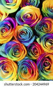 An Image of Rainbow Rose