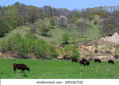 Image of a ranch in Hokkaido
