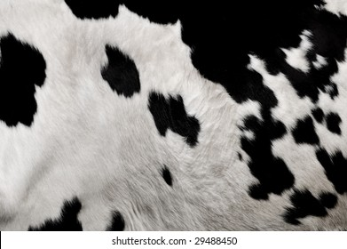 an image of a real cows hide in black and white clearly showing the fur and texture.