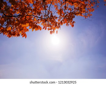 Image of red leaves and sun on sky background