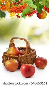 image of ripe apples in the basket close up
