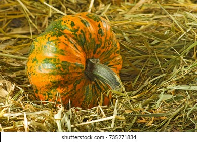 image of ripe pumpkin closeup