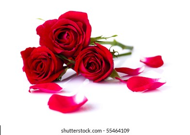 Image of roses and petals on white background.