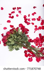 Image of roses and petals on white background, copy space