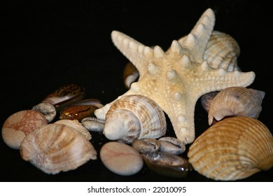 An image of a sea star with shells