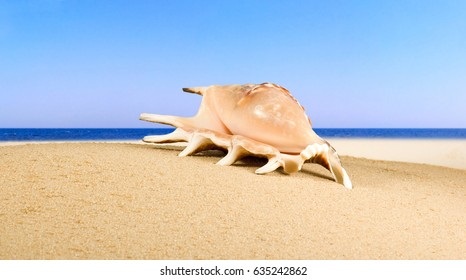 image of seashell in the sand against the sea, Image of shells on the beach by the sea, shell  as symbol of holiday, tourism, vacation