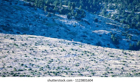Image shows 2 men running at the burned hills of the National Park Parnitha mountain.