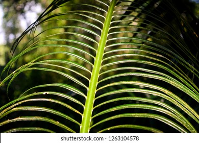 The image shows the branch of a palm tree with a natural sunlight effect.