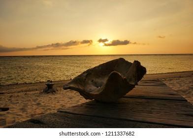 Image shows a cocunut on a tropical beach in Sri Lanka