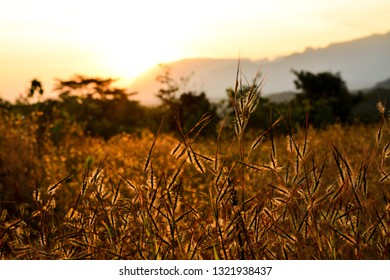 The image shows the dry grass with a sun rising in the background.