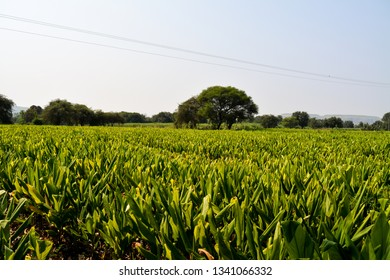 The image shows fields in the Maharashtra state of India