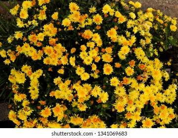 The image shows a large bunch of yellow wild flowers.