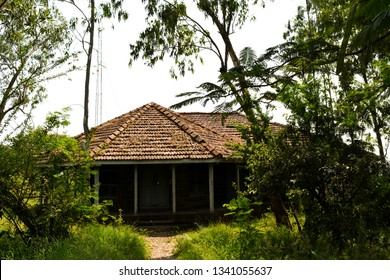 The image shows a lone empty house in the jungle, hidden among the trees.