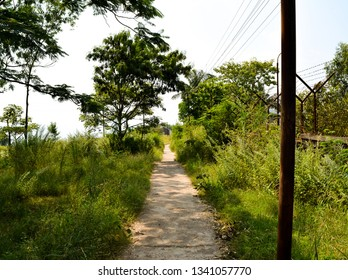 The image shows a road or a trail in a forest.