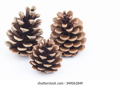 Image shows some pine cones isolated on white