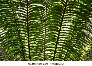 The image shows the texture created by the leaves of a palm tree with natural sunlight. The image was captured in December 2018 in Andaman Islands, India.