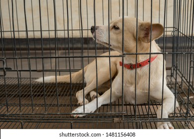 Image of sick dog lying in the quarantine cage. Concept of rabies virus disease