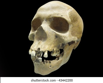 The image of skull under the dark background. Focus is under the front part of skull