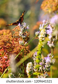Image of a small tortoiseshell butterfly on a flower.