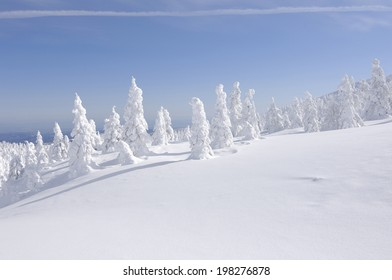 An Image of Soft Rime