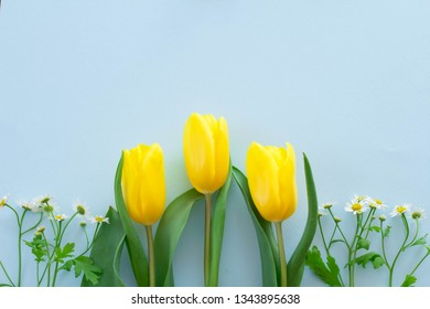Image of spring and presents with light blue background and yellow tulips