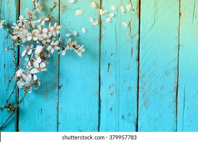 image of spring white cherry blossoms tree on blue wooden table