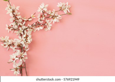 image of spring white cherry blossoms tree on pink wooden background