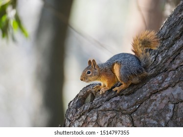 Image of a squirrel on a tree