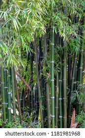 A image of stalks of green bamboo plants.