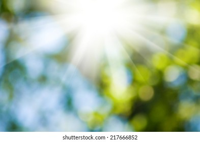 image of the sun in the blurry natural green background
