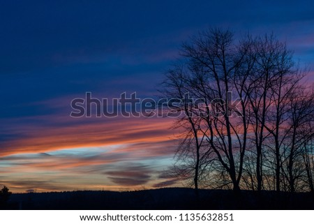 An image of a sunset at twilight with trees silhouetted in the foreground