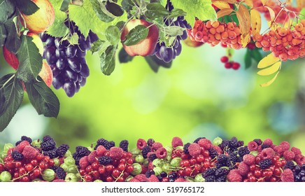 Image of sweet apples, grapes,raspberries and cherries
