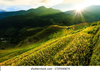 Image terraced rice fields, with very nice afternoon light.