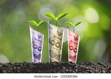 Image of THAI money banknotes with plant growing on top for business, saving, growth, economic concept